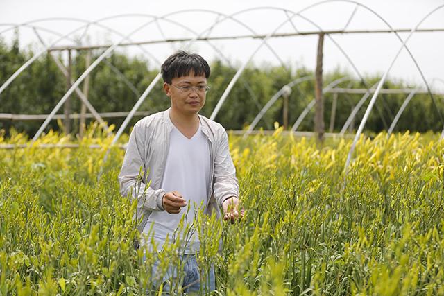 园区负责人杨龙查看黄花菜长势.JPG